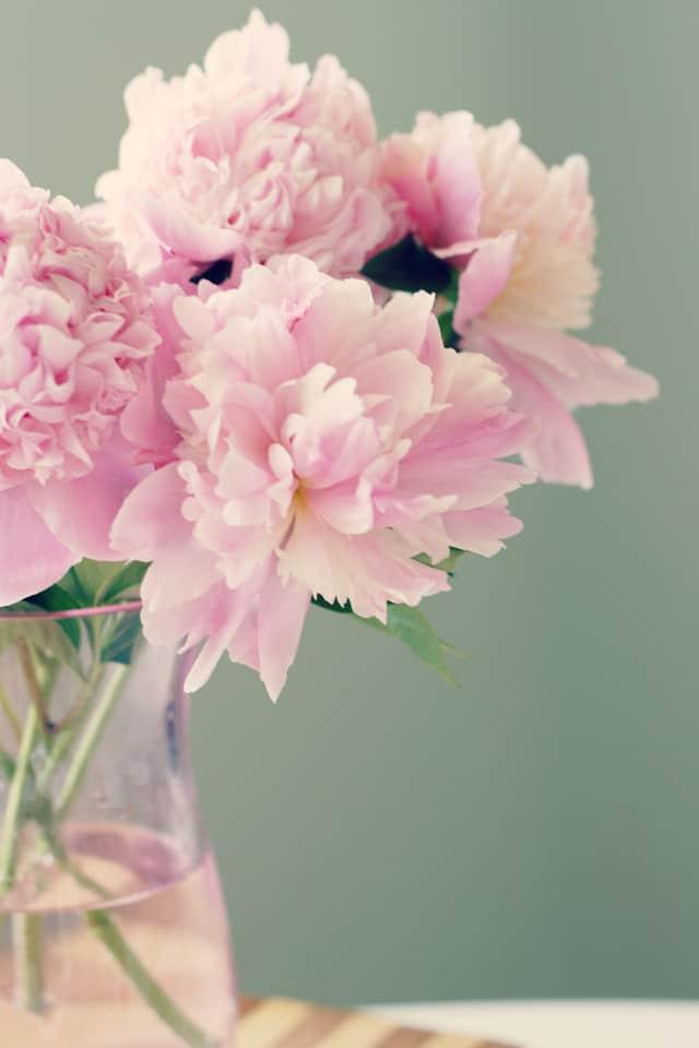 Pink peonies in a pink vase